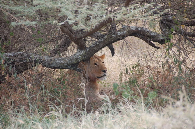 General in  Serengeti National Park, Tanzania, United Republic of, visiting things to do in Tanzania, United Republic of, Travel Blog, Share my Trip