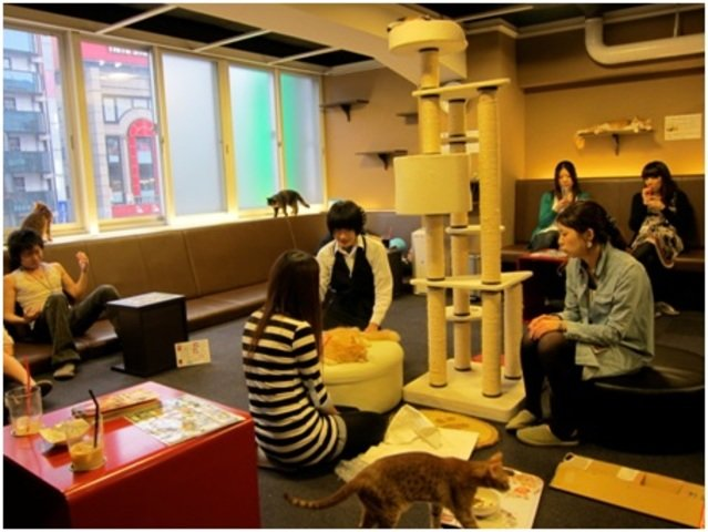 Food in  Tokyo Cat Cafe ねころび, Japan, visiting things to do in Japan, Travel Blog, Share my Trip