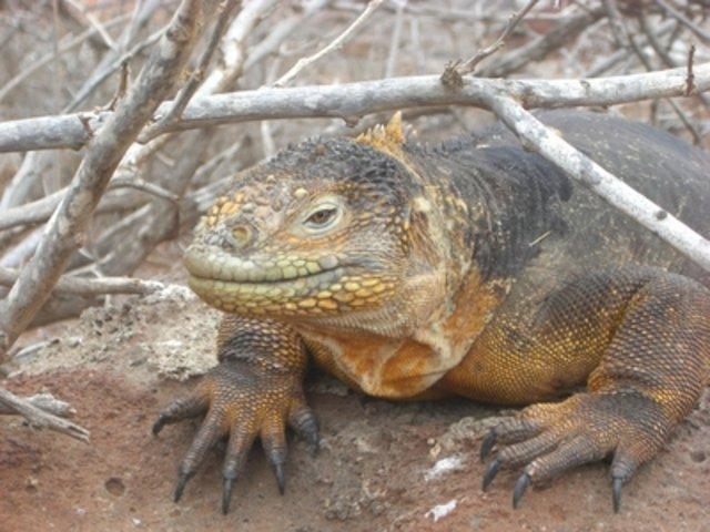 Nature in  Galapagos North Seymour Island, Ecuador, visiting things to do in Ecuador, Travel Blog, Share my Trip