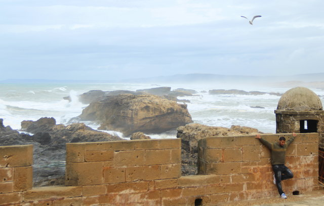 Sightseeing in  Essaouira, Marrakesh-Tensift-Al Haouz, Morocco, Morocco, visiting things to do in Morocco, Travel Blog, Share my Trip