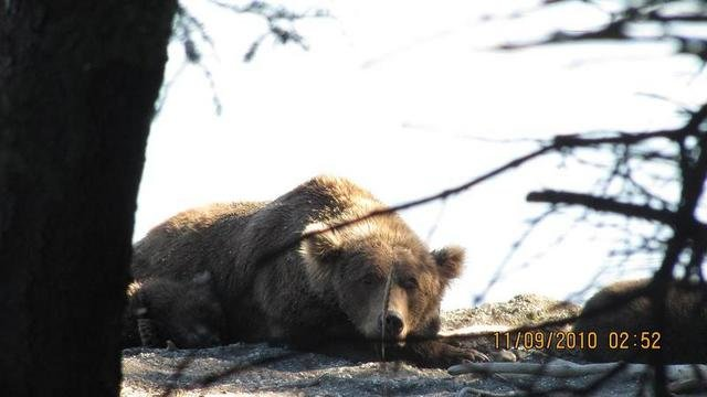 Camping in  Alaska Katmai National Park and Preserve, United States, visiting things to do in United States, Travel Blog, Share my Trip
