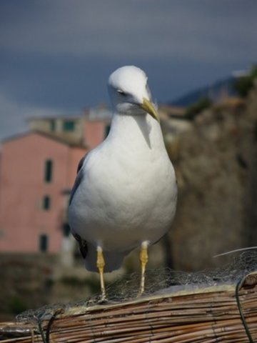 Sightseeing in  Cinque Terre, Italy, visiting things to do in Italy, Travel Blog, Share my Trip